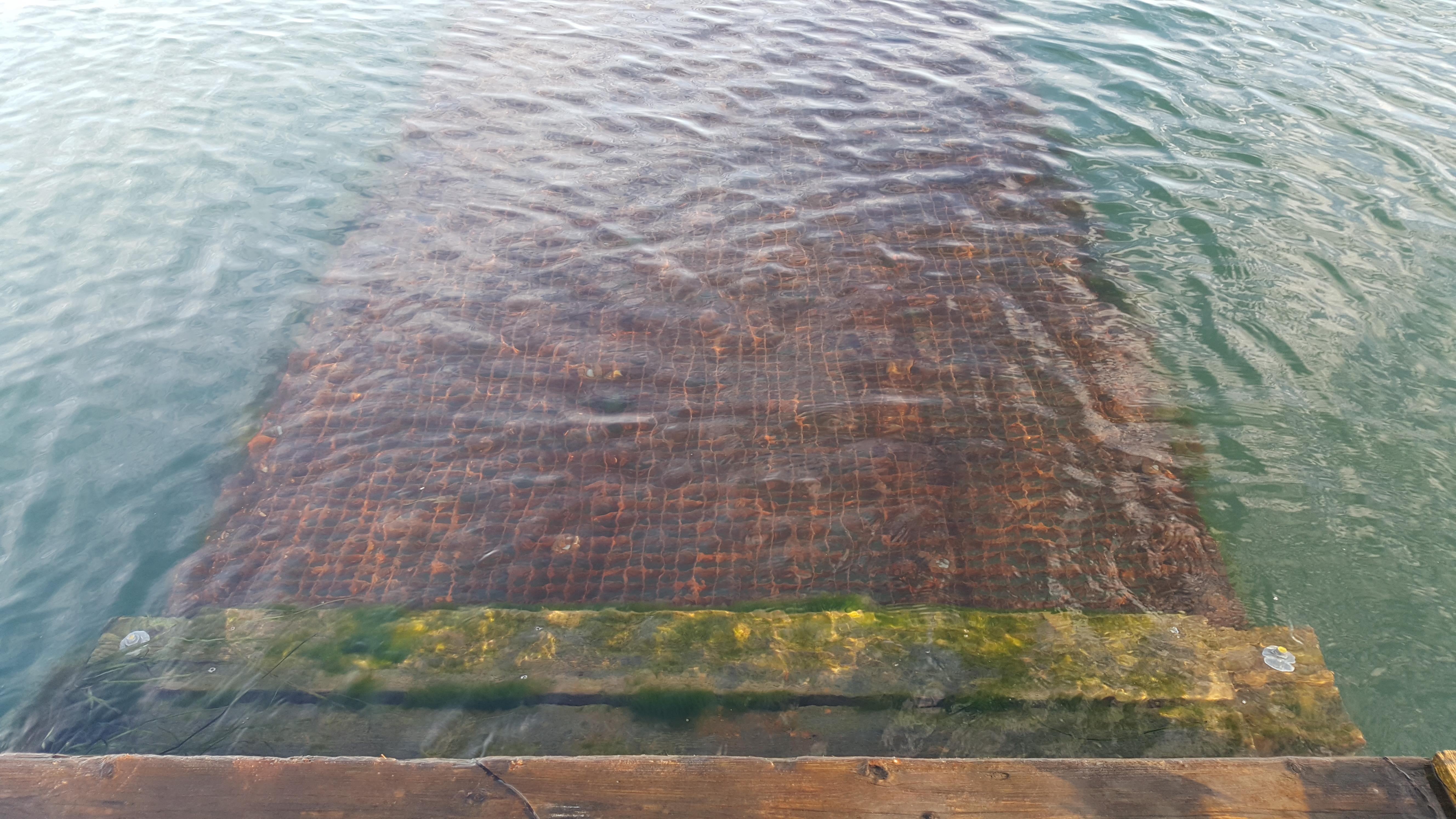 Lavbroen under vand